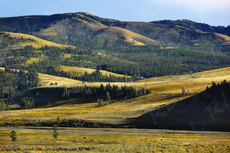 Lamar Valley,Yellowstone Nat'l Park,Wyoming,USA
