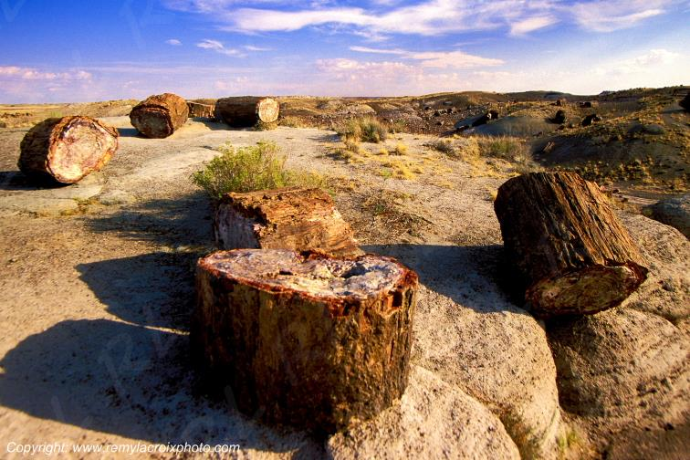 Petrified Forest National Park Crystal Forest Arizona USA