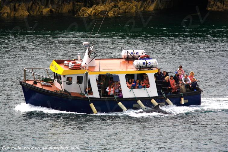 Dingle Kerry dauphin Irlande Ireland www.remylacroixphoto.com