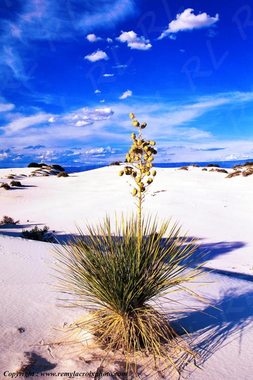 White Sands National Monument New-Mexico USA www.remylacroixphoto.com