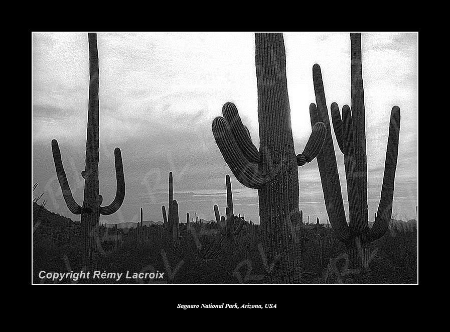 Saguaro National Monument,Arizona,USA