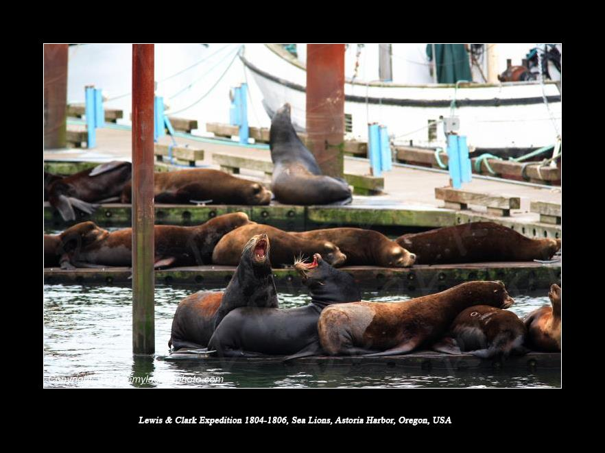 Lewis & Clark Expedition 1804-1806 Sea Lions Astoria Harbor Oregon USA