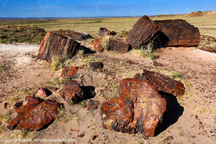 Crystal Forest,Petrified Forest National Park,Arizona,USA