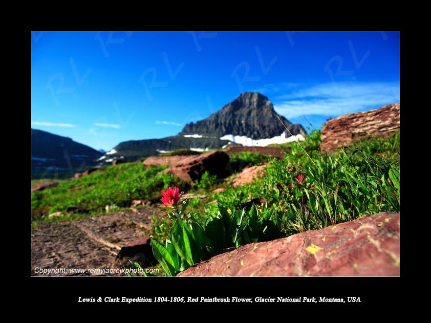 Lewis & Clark Expedition 1804-1806 Red Paintbrush Flower Logan Pass Glacier National Park Montana USA