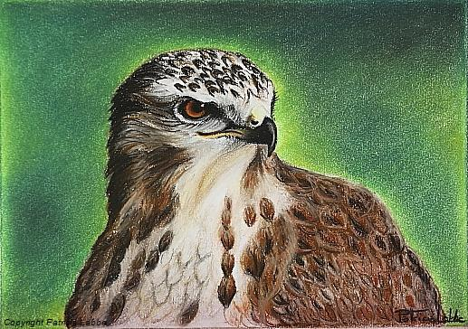Buse variable. Dessin crayons pastels, 20x28 cm
