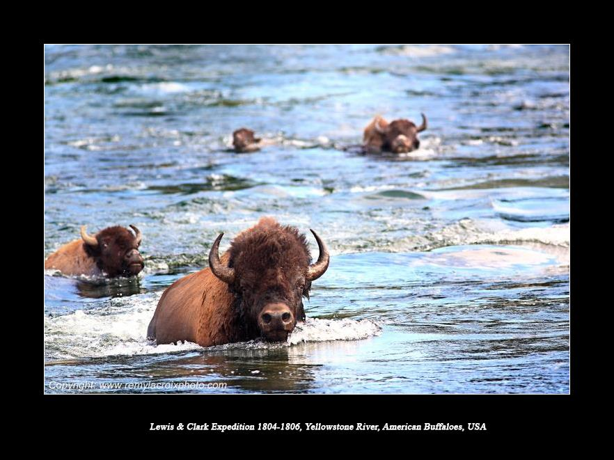 Lewis & Clark Expedition 1804-1806 Yellowstone River North American Buffaloes USA